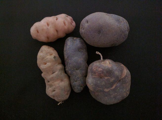 patate-pro-specie-rara